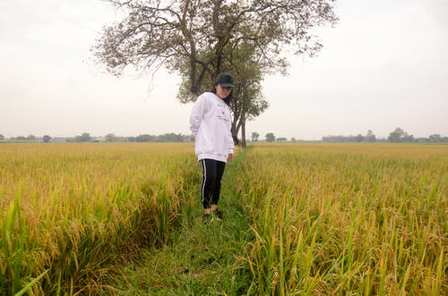 亞洲女孩, 村姑, 田, 農村 的 免費圖庫相片