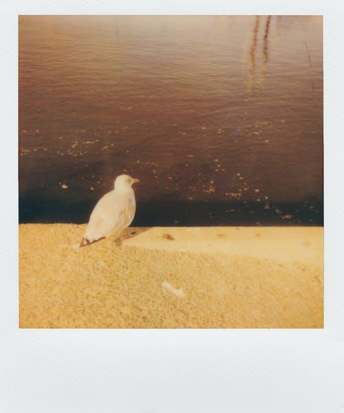 Fotoğraf, hayvan, kuş, martı içeren Ücretsiz stok fotoğraf