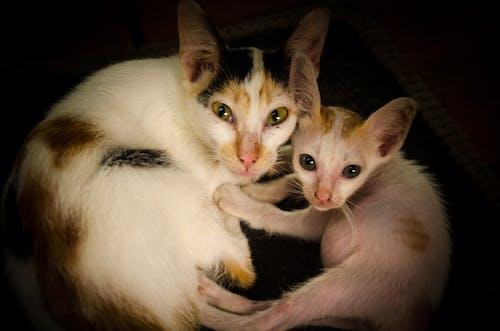 動物, 可愛的動物, 貓, 貓眼 的 免費圖庫相片