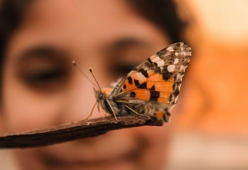 Imagine de stoc gratuită din bună dimineața, dimineața devreme, faună sălbatică, fluture