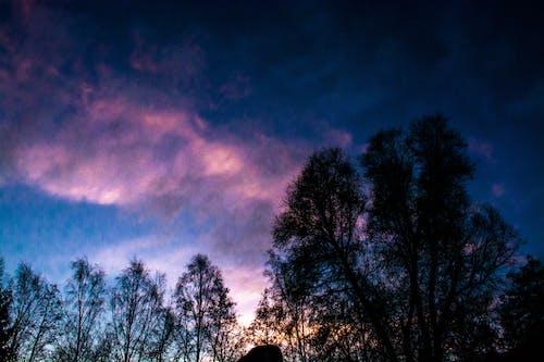 Free stock photo of sky, sunrise, trees