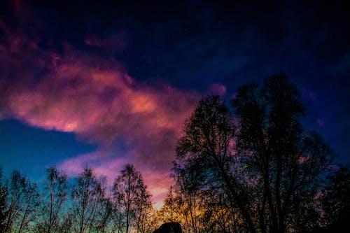 Darmowe zdjęcie z galerii z drzewa, niebo, wschód słońca