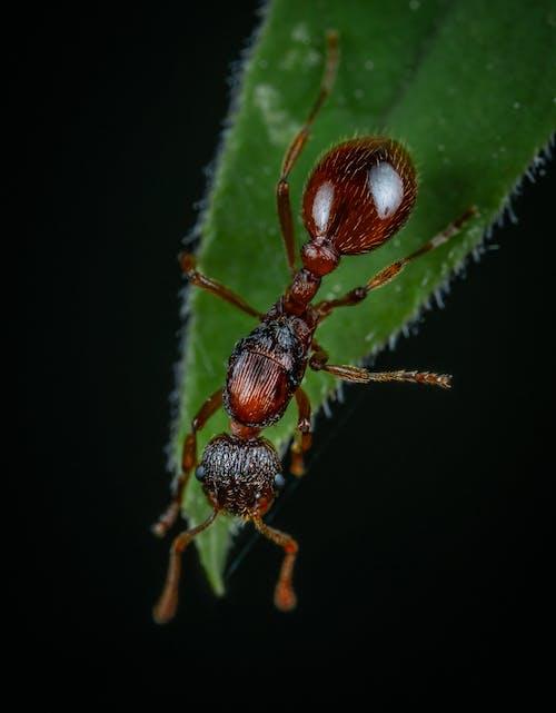 Fotobanka sbezplatnými fotkami na tému hmyz, makro, mravec