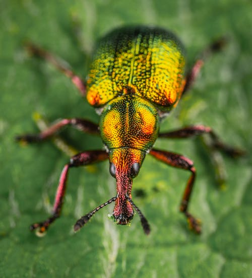 Fotobanka sbezplatnými fotkami na tému hmyz, makro, nosáčik