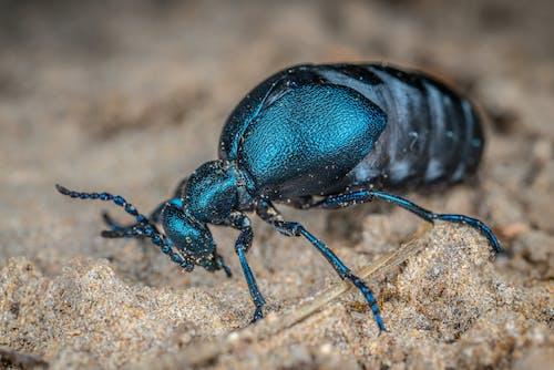 Fotobanka sbezplatnými fotkami na tému hmyz, makro