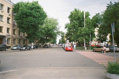 Foto d'estoc gratuïta de a l'aire lliure, aparcat, arbres, asfalt