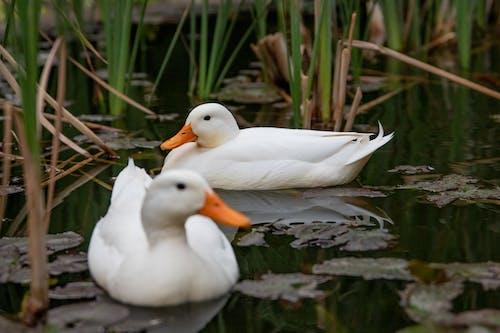 Ảnh lưu trữ miễn phí về ao, bơi, chim, con vật