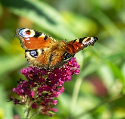 Ảnh lưu trữ miễn phí về Con bướm