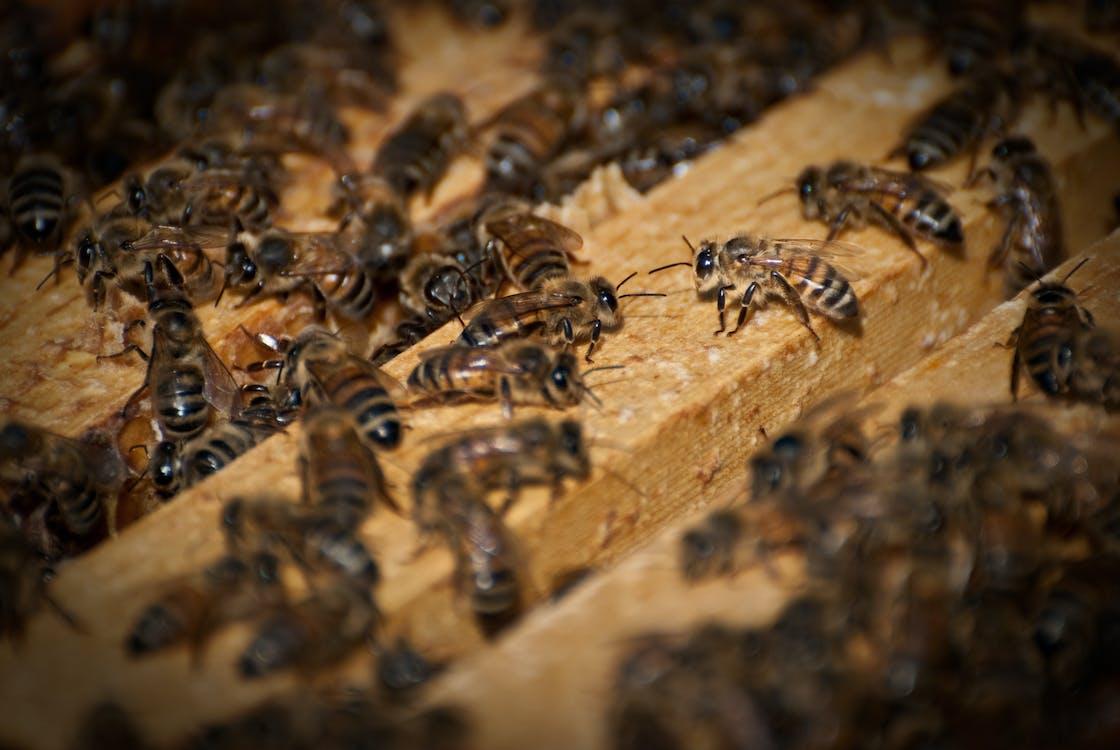 agbiopix, น้ำผึ้ง, ผึ้ง