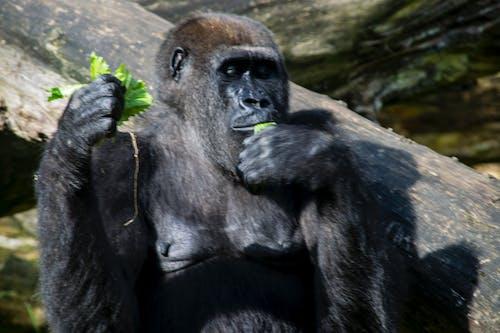 Ảnh lưu trữ miễn phí về khỉ, khỉ