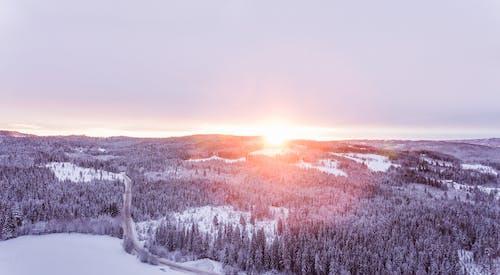 Kostenloses Stock Foto zu bäume, dämmerung, frost, gefroren