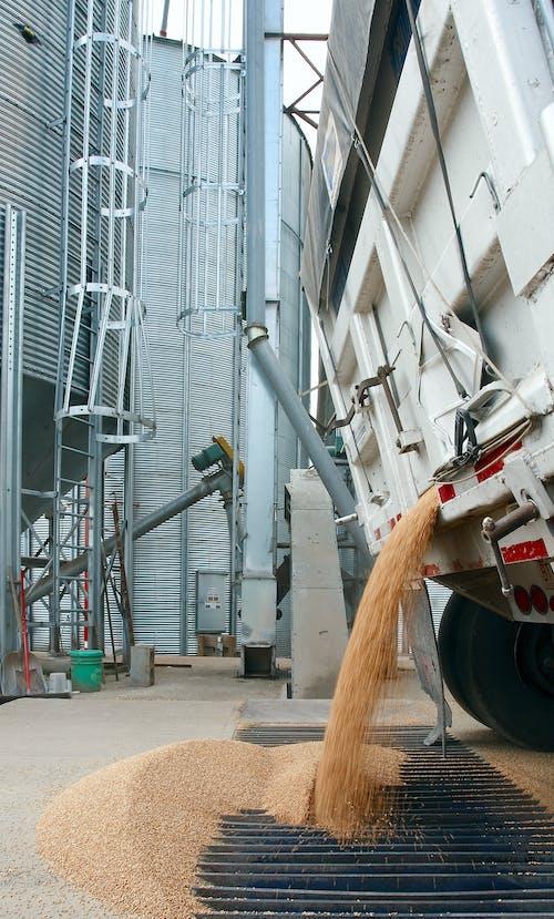 Foto d'estoc gratuïta de agbiopix, agricultura, blat, bolcat