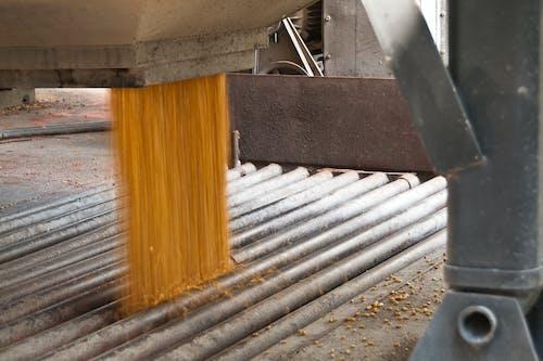 Foto d'estoc gratuïta de a l'aire lliure, acer, blat de moro, concentrar-se
