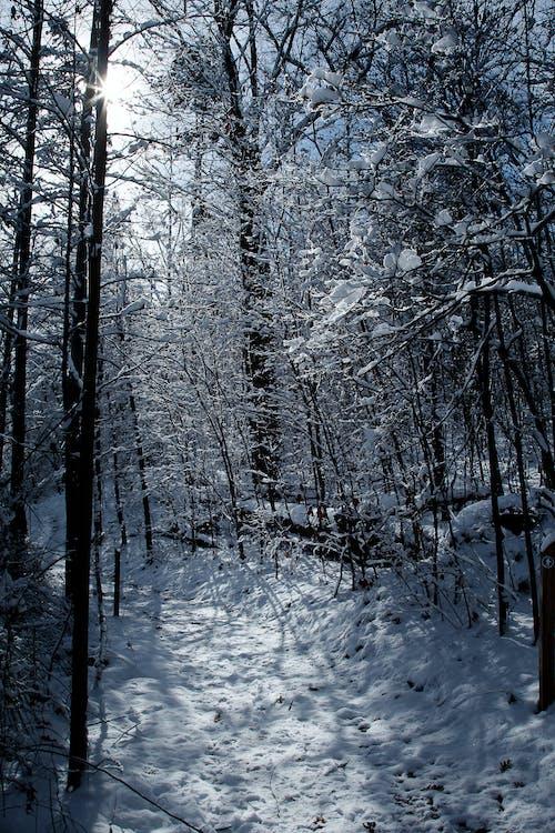 Foto d'estoc gratuïta de blau, constipat, hivern, neu