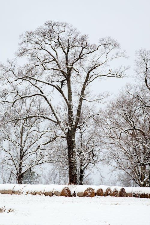 Foto d'estoc gratuïta de constipat, farratge, fiances, hivern