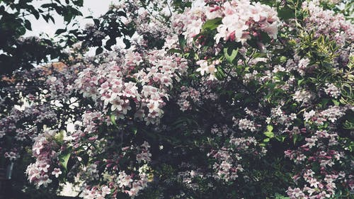 Fotos de stock gratuitas de arboles, flor, flora, flores