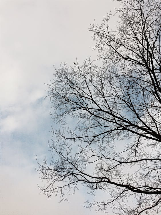 Kostenloses Stock Foto zu kahlen bäumen, klarer himmel, schönheit in der natur