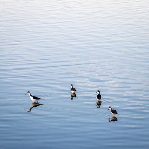 Immagine gratuita di acqua, fauna selvatica, lago, libero