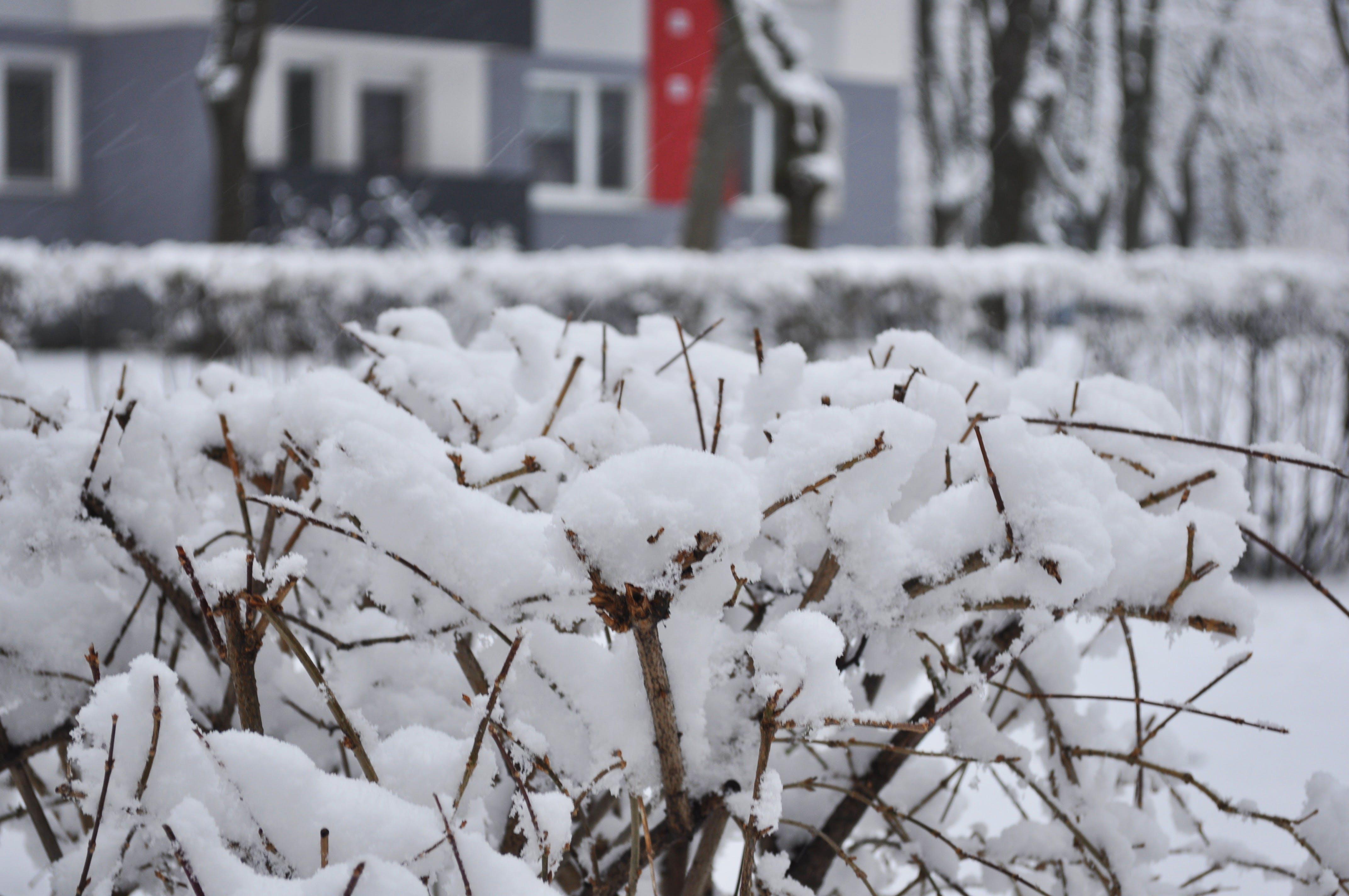 Immagine gratuita di alberi, bianco, cespugli, cespuglio