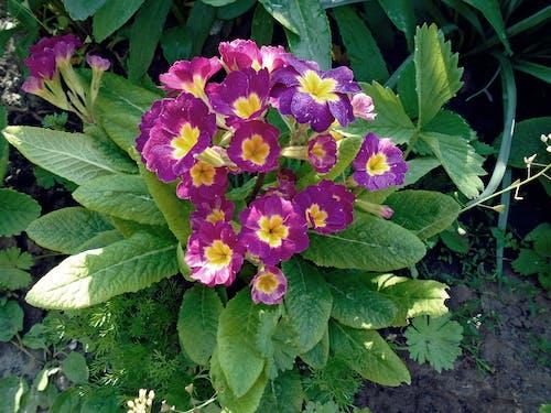 bahar, çekilmiş, Çiçek açmak, Çiçekler içeren Ücretsiz stok fotoğraf