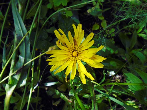 böcek, çiçek, gölge, sarı içeren Ücretsiz stok fotoğraf
