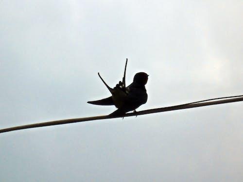 bahar, gökyüzü, gri, kara içeren Ücretsiz stok fotoğraf