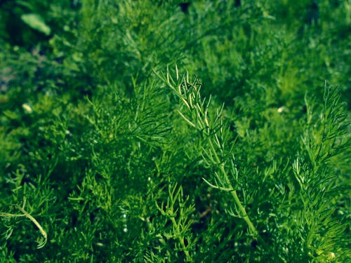 arka fon, bahar, çim, doğa içeren Ücretsiz stok fotoğraf