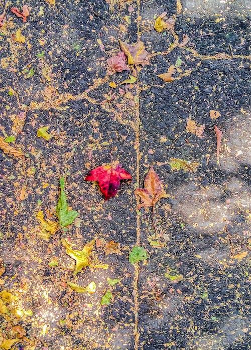 dökülmüş yapraklar, güz, güz yaprakları, kırmızı içeren Ücretsiz stok fotoğraf