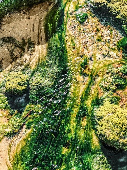 deniz kıyısı, geçerli, okyanus kıyısı, sahil kumu içeren Ücretsiz stok fotoğraf