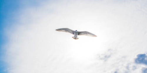 Бесплатное стоковое фото с голубое небо, птица, птицы