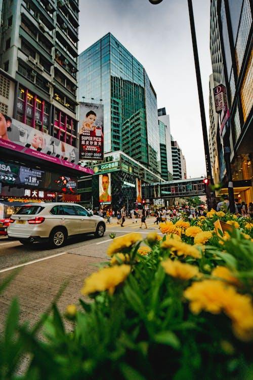 blomster, hongkong, livsstil