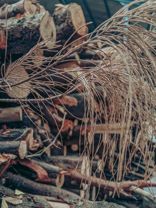 Imagine de stoc gratuită din arbore, crenguțe, trunchiuri de copac