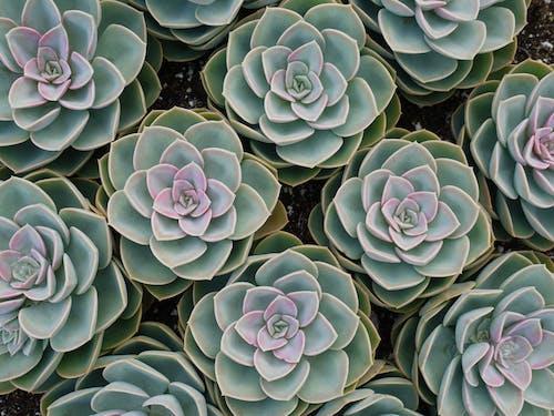 Foto d'estoc gratuïta de art, botànic, color, creixement