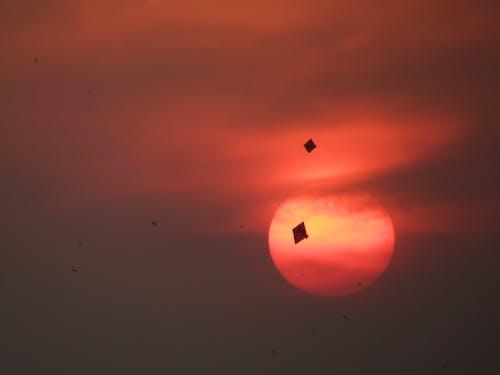 Photos gratuites de cerf-volant, coucher de soleil