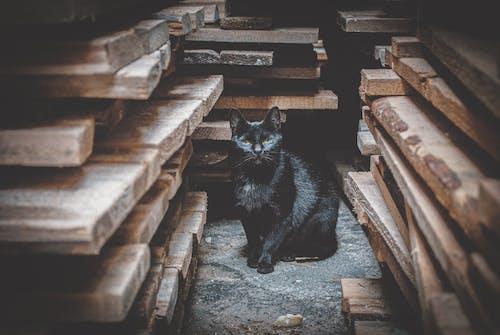 Free stock photo of 4k wallpaper, animal photography, black cat