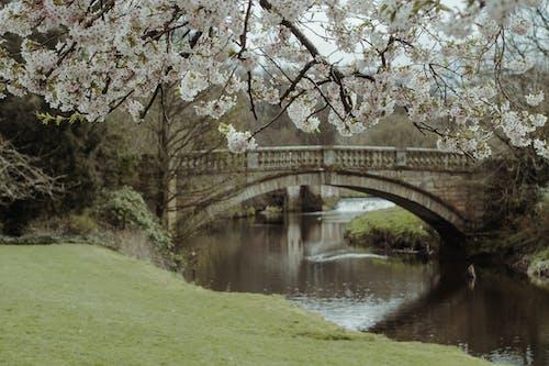 公園, 增長, 天性, 季節 的 免费素材照片