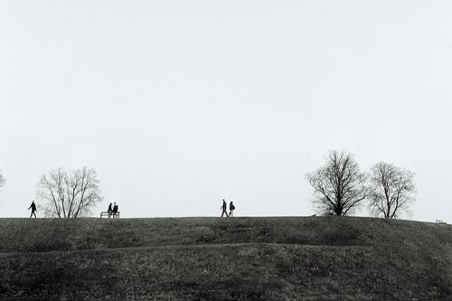 People on Grass and Bare Tree Field during Day