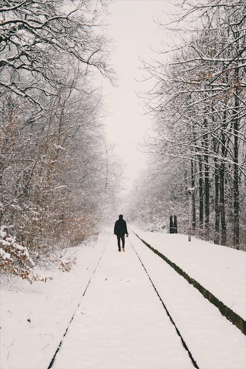 adam, ağaçlar, beyaz, buz içeren Ücretsiz stok fotoğraf