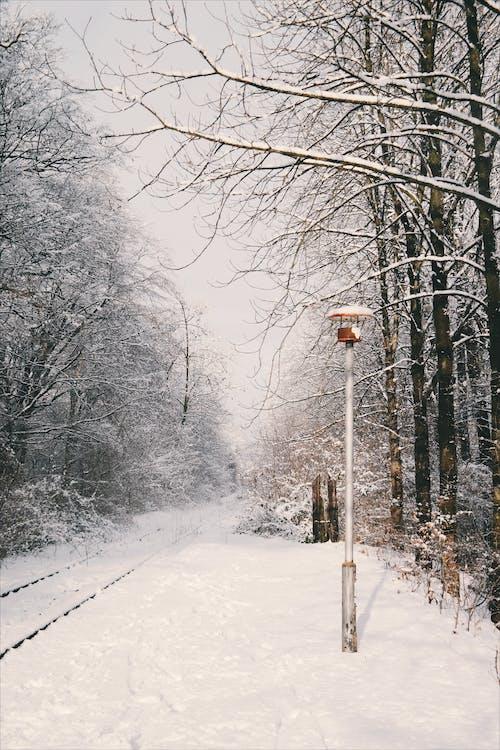 冬季, 冷, 天性, 戶外 的 免費圖庫相片