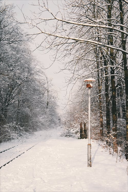cold, forest, lamp
