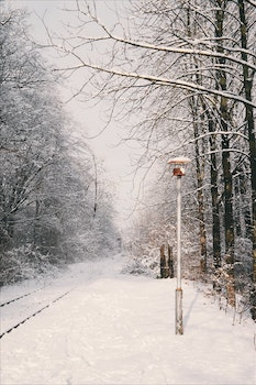 Free stock photo of cold, snow, nature, street