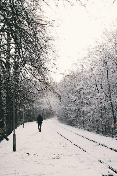 açık hava, adam, ağaçlar, ahşap içeren Ücretsiz stok fotoğraf