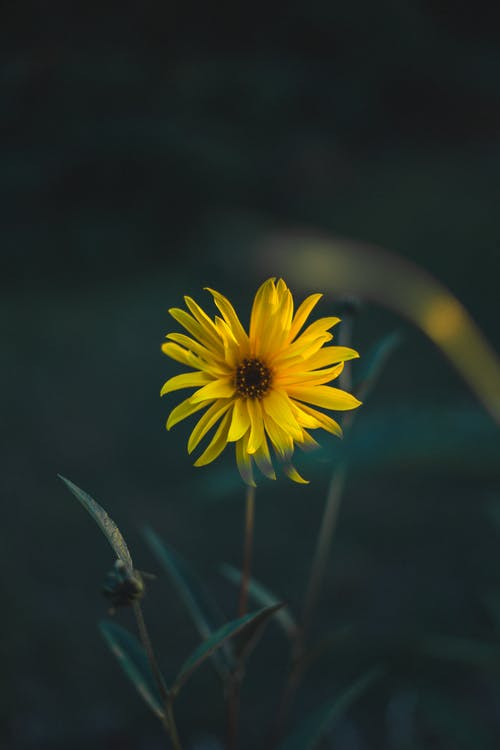Free stock photo of bokeh, close up, flower, nature