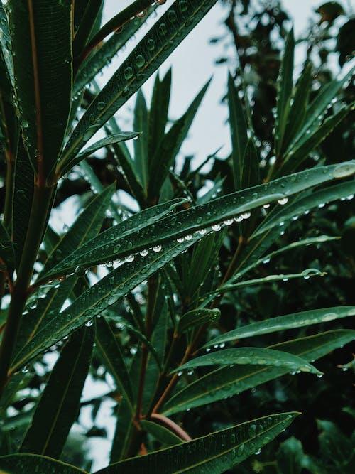 Gotas De Agua Sobre La Planta De Hojas Verdes