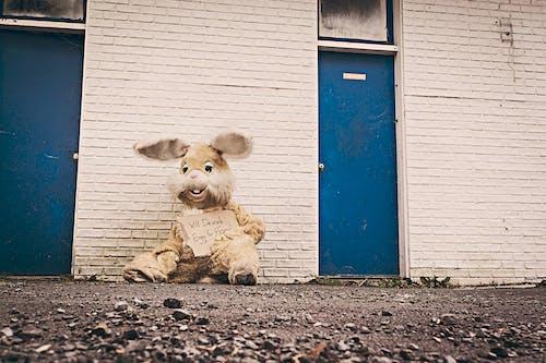 Foto d'estoc gratuïta de conill, conill de Pasqua, demanant, disfressa