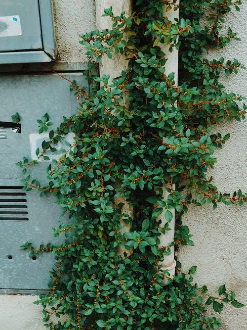 Green-leafed Plants Beside Wall