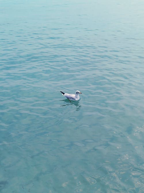 คลังภาพถ่ายฟรี ของ ทะเล, นก, นกนางนวล, นกน้ำ