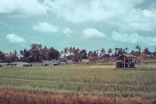 คลังภาพถ่ายฟรี ของ กัมพูชา, การท่องเที่ยว, การเกษตร, ขรุขระ