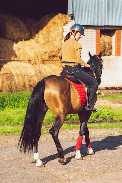 Immagine gratuita di allenamento, animali, cavallo, donna