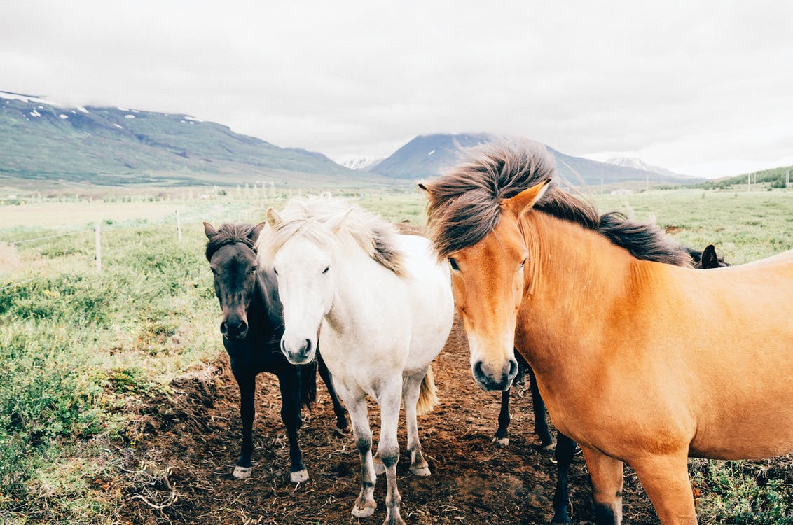 Black, White, and Brown Horses Standing on Green Grasses